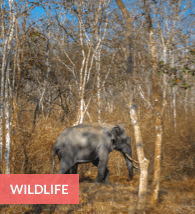 Wildlife in Bangalore